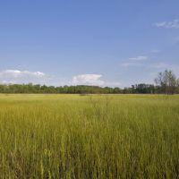 Irwin Prairie Nature Preserve, Силваниа