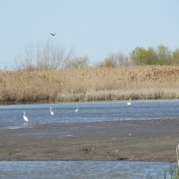 Bird sanctuary on the Woodtick Peninsula tip, Харбор-Вью