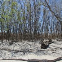 Erie Beach, Харбор-Вью