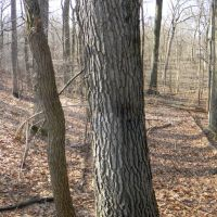 Wildwood Preserve - Brown Trail, Холланд