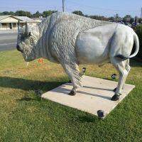 Buffalo in Atoka AZ, Атока