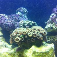 Photo from Oklahoma Aquarium in Jenks, OK, Дженкс