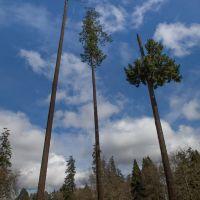 Oregon Pines, Корваллис