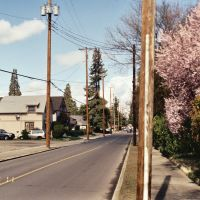 Trees in Blossom on Genesee St. Medford, Oregon, Медфорд