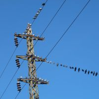 Birds on a Wire, Милуоки