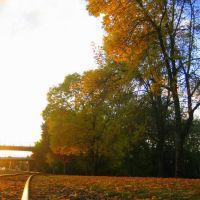 Albany Rails, Олбани