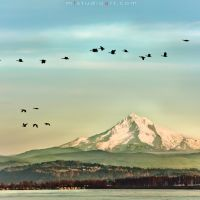 mt. Hood view from Columbia river., Паркрос