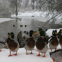 Duck pond, Oregon City, OR, Пендлетон