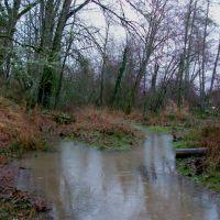 Flooded Paths, Спрингфилд