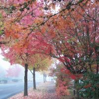 Fall, Спрингфилд