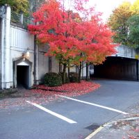 Red tree by the tunnel, Хеппнер