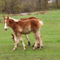 Noble Road Horse Pasture, Атглен