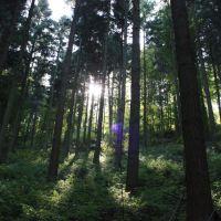 Wald Baden Baden, Баден