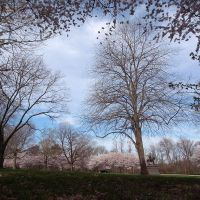 the landscape of Fairmount Park in early spring, Белмонт