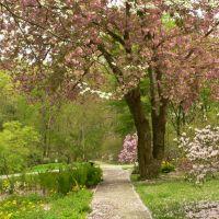 Jenkins Arboretum, April 2008, Бервин