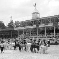 Devon Horse Show, Бервин