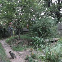 Back yard, Бивер