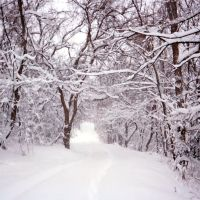 Snowy Alley, Брентвуд