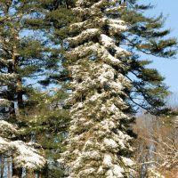 Winter Treasure Special Spot, Брин-Атин