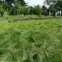Chanticleer, Ruins Garden Grasses, Брумалл