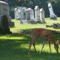 Washington Cemetery, Pennsylvania, Вашингтонвилл