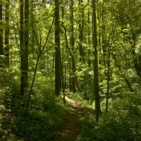 Blue Marsh trail, Вернерсвилл
