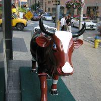 Senator Cow (2), Гаррисберг