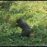 marmot 2 - VII 2006, Грин-Три