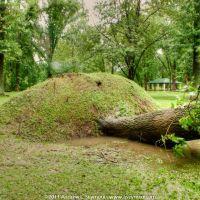 Kerr Park - Fallen Tree, Даунингтаун