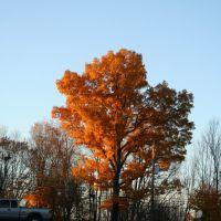 tree, Джонстаун