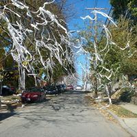 Toilet Papers All over street, Дормонт