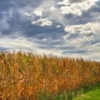 Field, Ист-Норритон