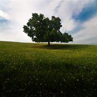 Lauxmont Tree, Ист-Проспект