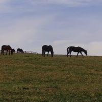Lauxmont Horse Farm Wrightsville, Ист-Проспект