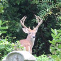 A Big Buck in the Circle of St. John, Колвин
