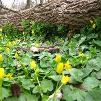 Heinz NWR Wildflowers, Коллингдейл