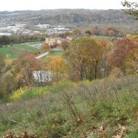 Turkey on a hillside in Pittsburgh, Крафтон