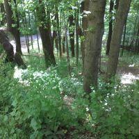 Seibert Path 1, Кэмп-Хилл