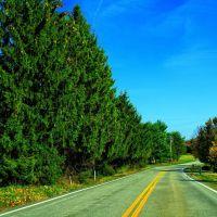 pines, Лангелот