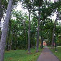 Bucknell forest, Линнтаун