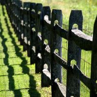 Fence Shadows, Модена