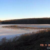 A few geese at Chambers Lake, Модена