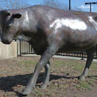 Cow sculpture, Overbrook SEPTA station, Philadelphia, PA, Нарберт