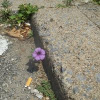 flower in a crack, Немаколин