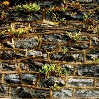 Stone Wall, Норристаун