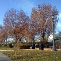 St Davids Community Park, Раднор