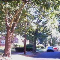 Bingham St. (From Rhawn St.), Рокледж