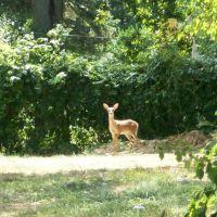 Bambi, Рокледж