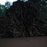 Fallen tree, Селлерсвилл