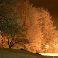 Midnight Snow - Snow coverd trees - Lock Haven, PA, Флемингтон